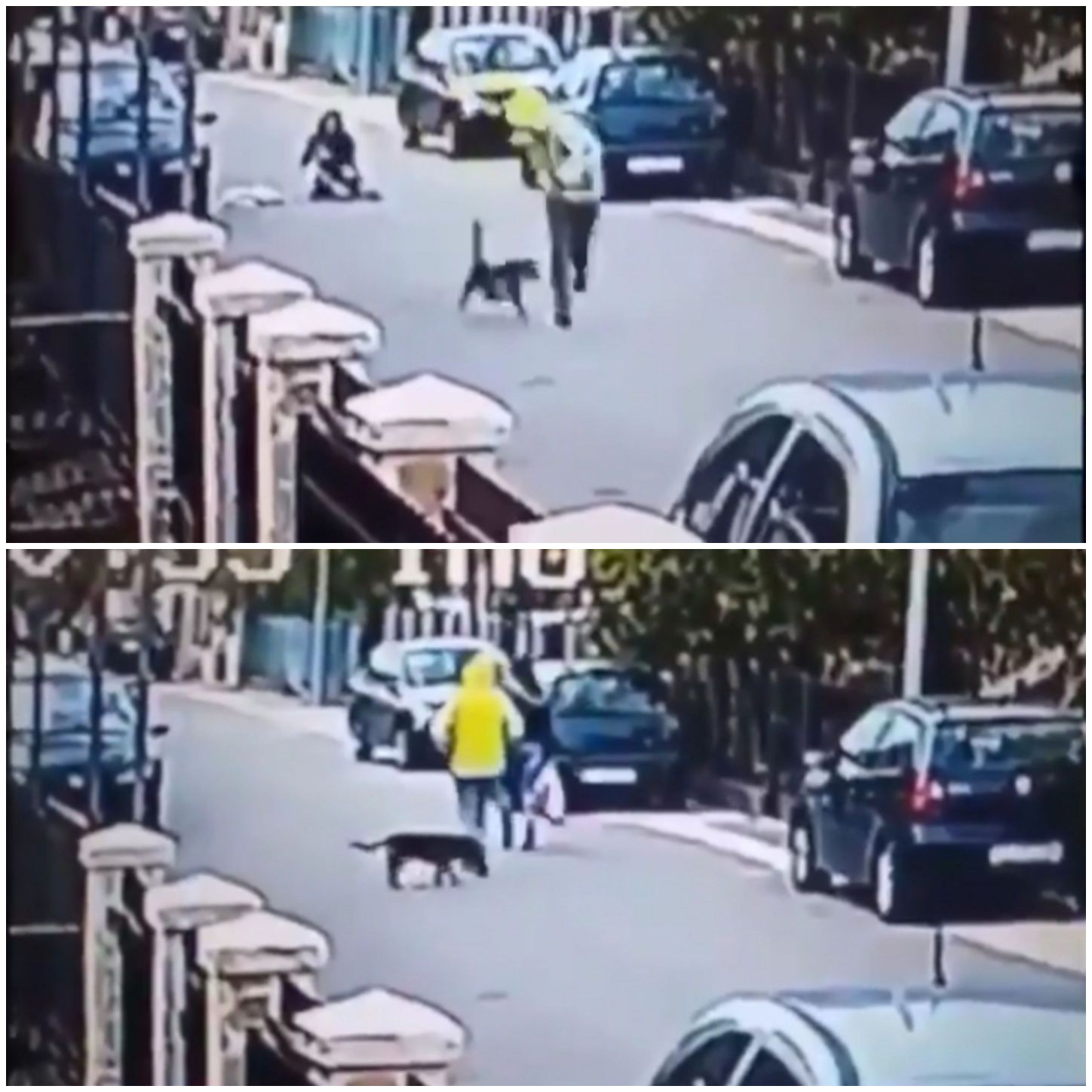 Dog in street situation but heroic saves a woman from an assailant