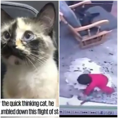 Cat saves baby that escaped from her crib from falling down steep stairs